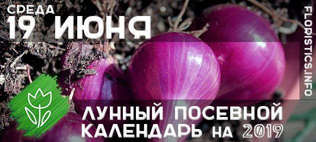 Лунный календарь садовода-огородника на 19 июня 2019 года