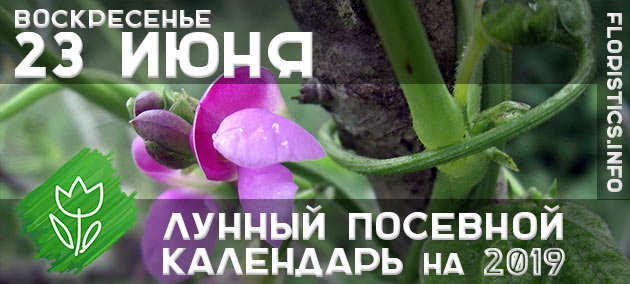 Лунный календарь садовода-огородника на 23 июня 2019 года
