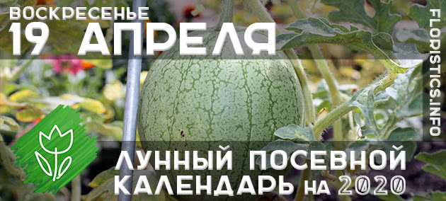 Лунный календарь садовода-огородника на 19 апреля 2020 года