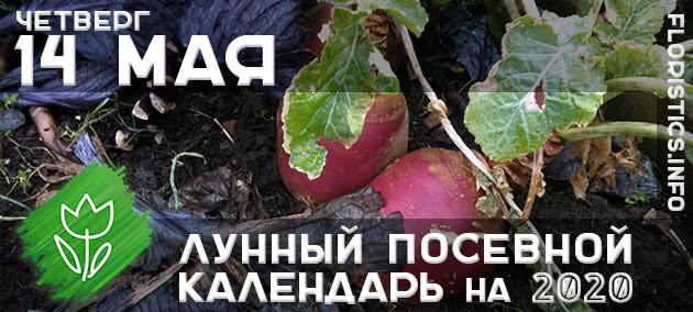 Лунный календарь садовода-огородника на 14 мая 2020 года