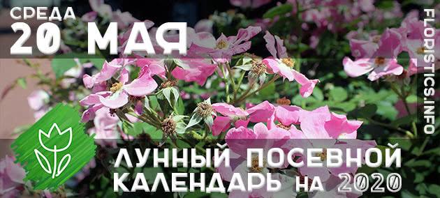 Лунный календарь садовода-огородника на 20 мая 2020 года