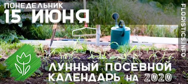 Лунный календарь садовода-огородника на 15 июня 2020 года