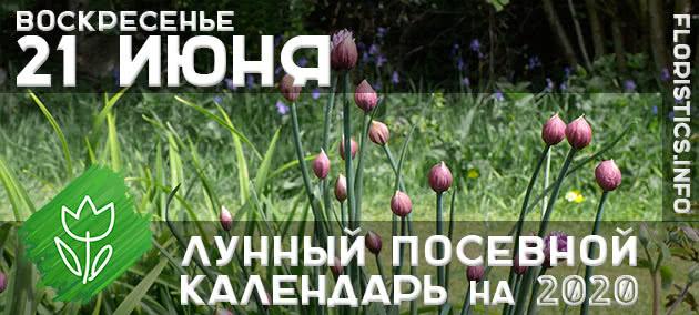 Лунный календарь садовода-огородника на 21 июня 2020 года