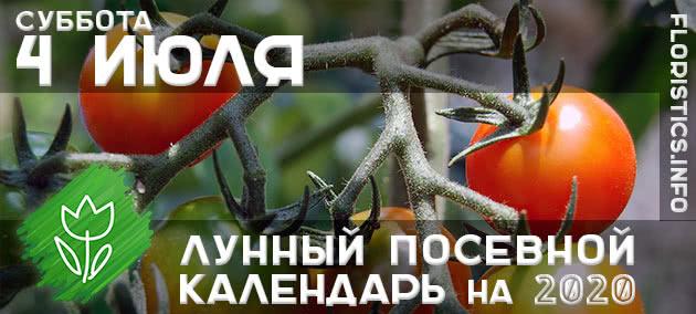 Лунный календарь садовода-огородника на 4 июля 2020 года
