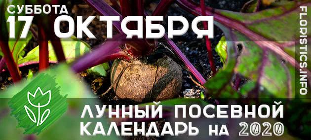 Лунный календарь садовода-огородника на 17 октября 2020 года