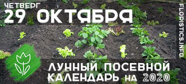 Лунный календарь садовода-огородника на 29 октября 2020 года