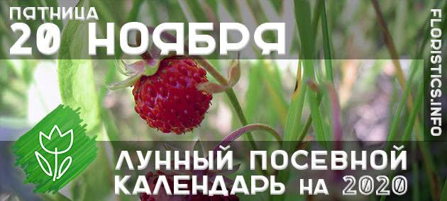 Лунный календарь садовода-огородника на 20 ноября 2020 года