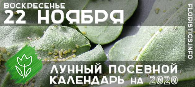 Лунный календарь садовода-огородника на 22 ноября 2020 года