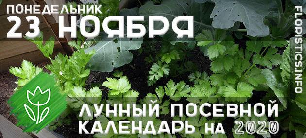 Лунный календарь садовода-огородника на 23 ноября 2020 года