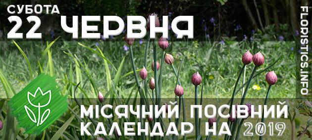 Місячний календар садівника-городника на 22 червня 2019 року