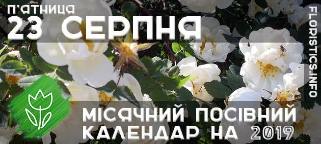 Місячний календар садівника-городника на 23 серпня 2019 року