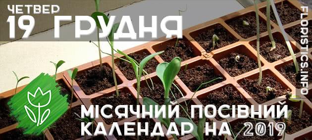 Місячний календар садівника-городника на 19 грудня 2019 року
