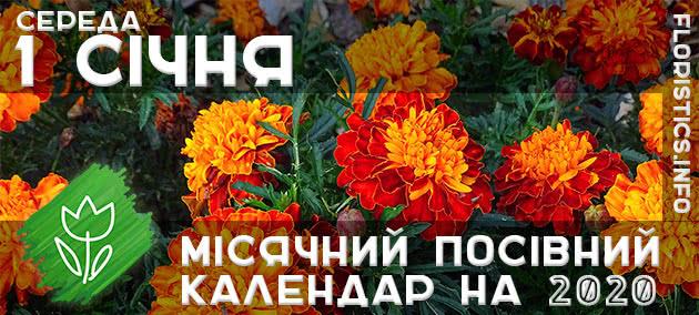 Місячний календар садівника-городника на 1 січня 2020 року