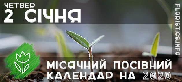 Місячний календар садівника-городника на 2 січня 2020 року