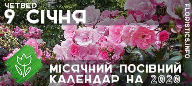 Місячний календар садівника-городника на 9 січня 2020 року