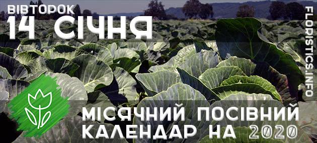 Місячний календар садівника-городника на 14 січня 2020 року