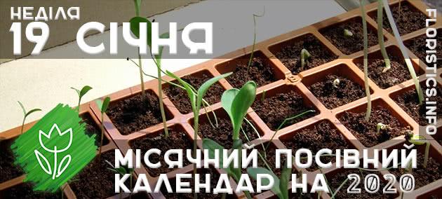 Місячний календар садівника-городника на 19 січня 2020 року