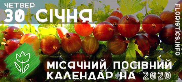 Місячний календар садівника-городника на 30 січня 2020 року