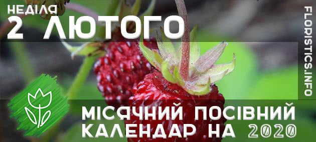Місячний календар садівника-городника на 2 лютого 2020 року
