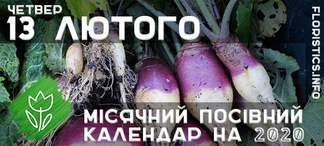 Місячний календар садівника-городника на 13 лютого 2020 року