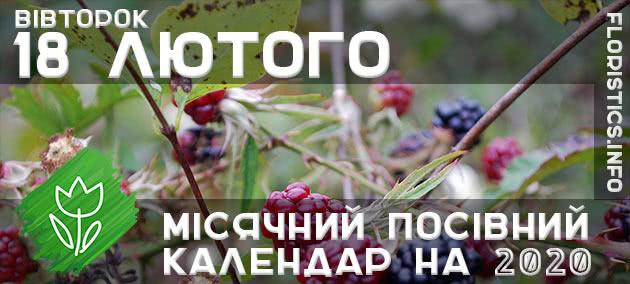Місячний календар садівника-городника на 18 лютого 2020 року