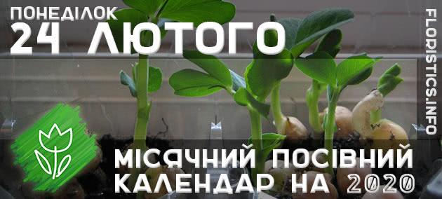 Місячний календар садівника-городника на 24 лютого 2020 року