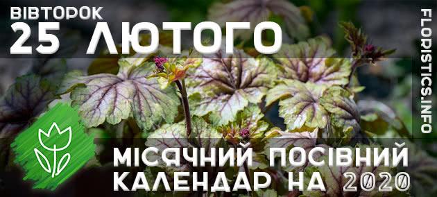 Місячний календар садівника-городника на 25 лютого 2020 року