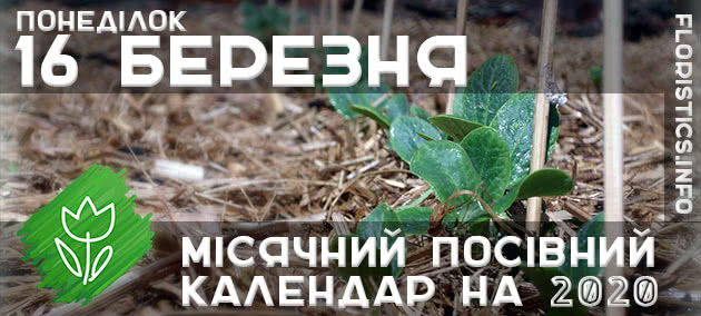 Місячний календар садівника-городника на 16 березня 2020 року