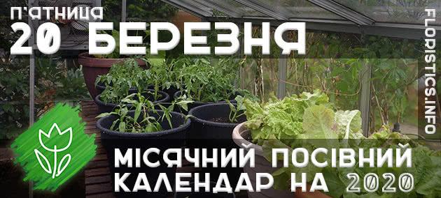 Місячний календар садівника-городника на 20 березня 2020 року