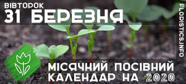 Місячний календар садівника-городника на 31 березня 2020 року