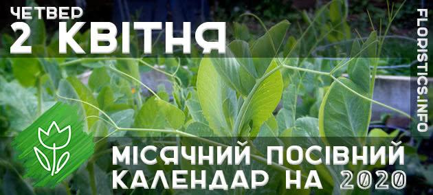 Місячний календар садівника-городника на 2 квітня 2020 року