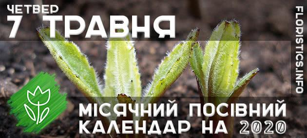 Місячний календар садівника-городника на 7 травня 2020 року