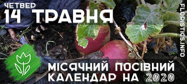 Місячний календар садівника-городника на 14 травня 2020 року