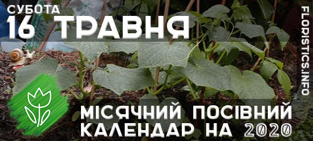 Місячний календар садівника-городника на 16 травня 2020 року