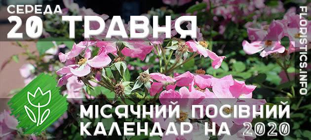 Місячний календар садівника-городника на 20 травня 2020 року