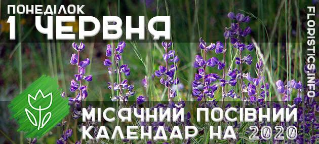 Місячний календар садівника-городника на 1 червня 2020 року
