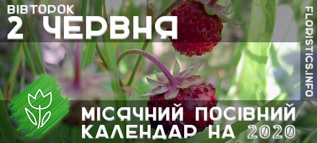 Місячний календар садівника-городника на 2 червня 2020 року