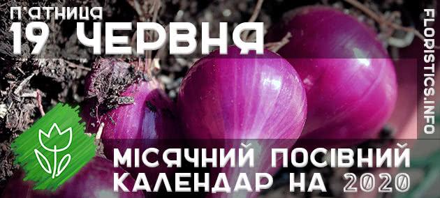 Місячний календар садівника-городника на 19 червня 2020 року