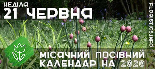 Місячний календар садівника-городника на 21 червня 2020 року