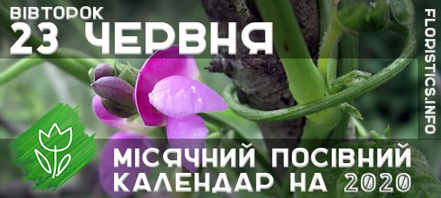 Місячний календар садівника-городника на 23 червня 2020 року