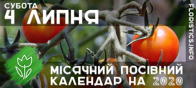 Місячний календар садівника-городника на 4 липня 2020 року