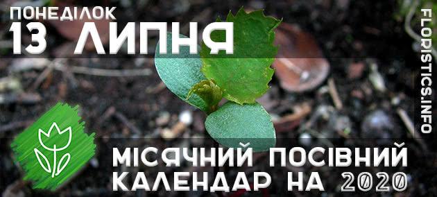 Місячний календар садівника-городника на 13 липня 2020 року