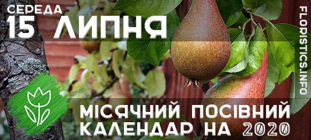 Місячний календар садівника-городника на 15 липня 2020 року