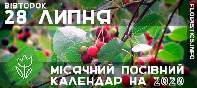 Місячний календар садівника-городника на 28 липня 2020 року