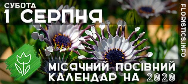 Місячний календар садівника-городника на 1 серпня 2020 року