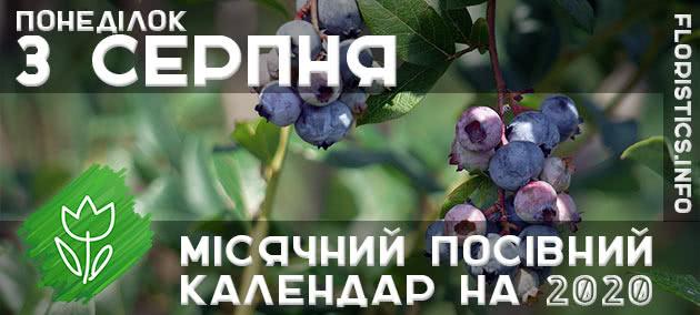 Місячний календар садівника-городника на 3 серпня 2020 року