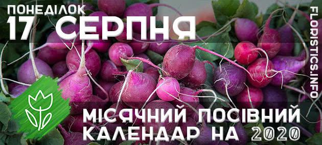 Місячний календар садівника-городника на 17 серпня 2020 року