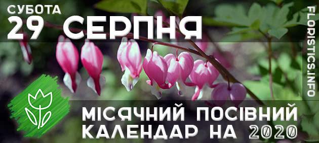 Місячний календар садівника-городника на 29 серпня 2020 року