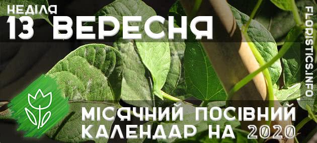 Місячний календар садівника-городника на 13 вересня 2020 року