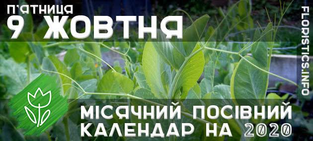 Місячний календар садівника-городника на 9 жовтня 2020 року
